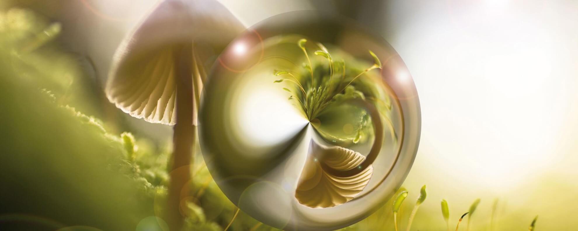 La mycothérapie - La médecine naturelle des champignons